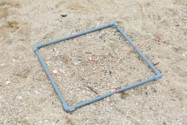 ② 50センチメートル四方の枠の中から、深さ約7センチメートルまでの砂を採取する。