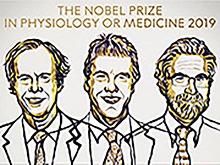 今年のノーベル医学生理学賞は米英の3人に 授賞理由は「細胞の低酸素応答の仕組みの発見」