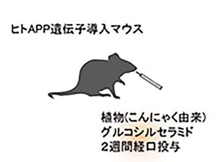 アルツハイマー病予防に植物由来のセラミドが有効 マウスの実験結果から北大グループ