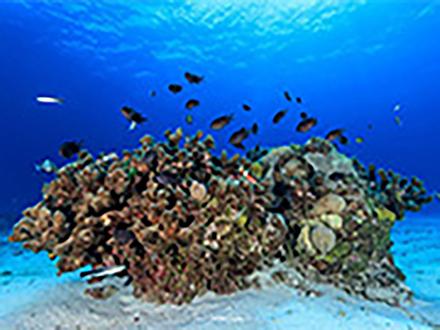海洋熱波で熱帯魚に生理学的影響 沖縄科学技術大学院大学などが解明