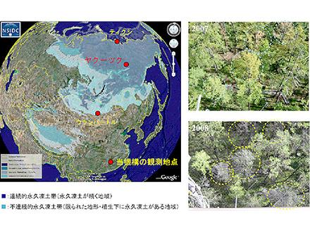 凍土融解で森林が枯死
