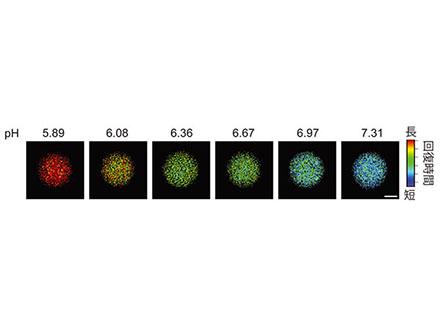 ホタル発光利用の生体pHモニター