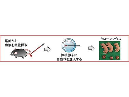 血液1滴からクローンマウス