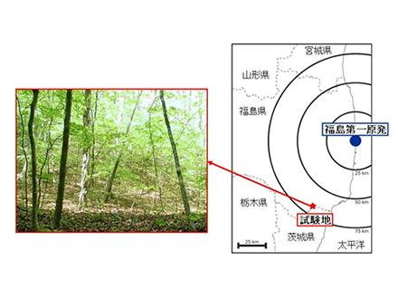 放射性セシウム、森林土壌の10cm表層にとどまる