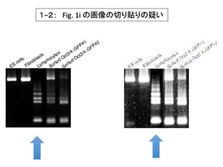 理研がSTAP現象の検証方法を発表