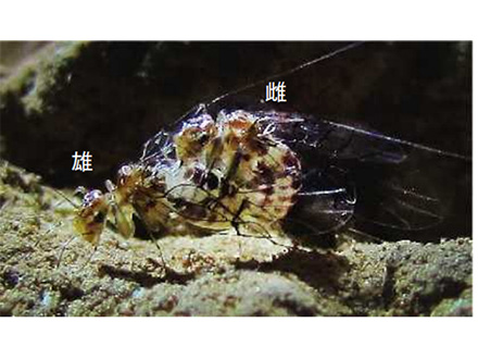 雌雄逆の昆虫発見の日本人研究者ら4人にイグ・ノーベル賞