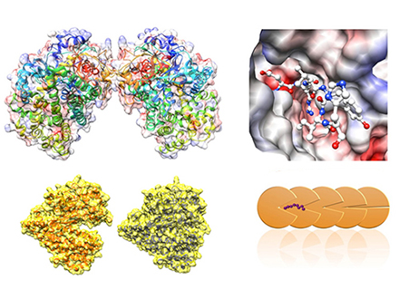 宇宙で酵素を結晶化して立体構造解析