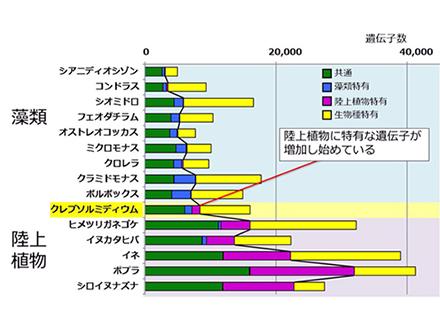 藻類から陸上植物への遺伝子進化示す