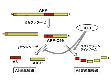 アルツハイマー病マウスの記憶取り戻す 利根川進氏らのグループが成功