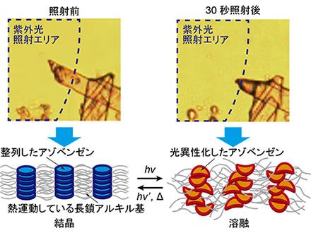 有機結晶が光で溶ける仕組みを解明