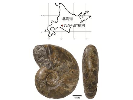 海底下の微生物、恐竜時代から生きていた 海洋機構など発見