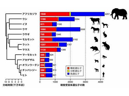 カモノハシとハリモグラのゲノム解読 哺乳類進化の解明に活用へ