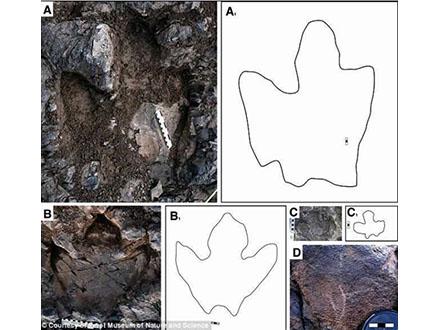 北極圏で恐竜の子連れ越冬の跡を発見