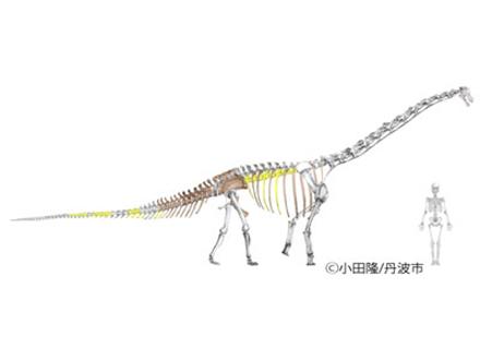 丹波竜は貴重な新属新種の恐竜だった