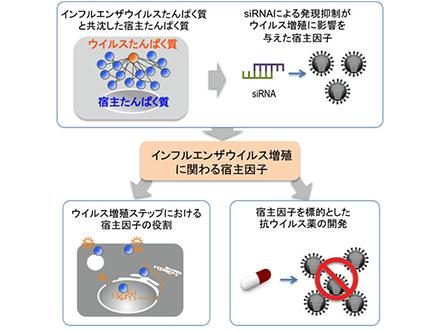 インフルエンザウイルスの宿主因子を発見
