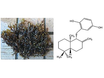 藻類の成分が潰瘍性大腸炎を抑制