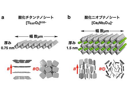 引っ張ると頑丈になる最強の高分子ゲルを開発 人工靭帯・関節に期待、東大グループ
