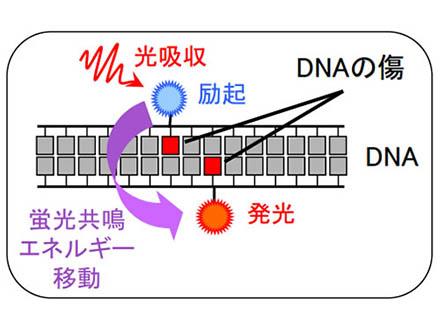 岡山大が次世代の中性子線がん治療研究でIAEAと協力協定