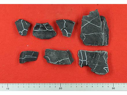 福岡で見つかったカメ化石は新種だった
