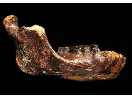 台湾海峡でアジア第4の原人化石を発見