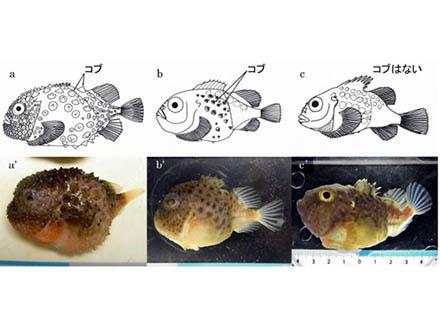わずかな海水調べ魚群を探知 環境DNA解析技術を舞鶴湾で実証
