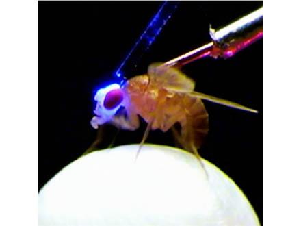 働かないアリも集団維持に必要 北大研究者が興味深い研究成果