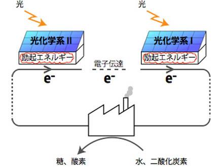 低エネ光の利用期待できる分子膜開発