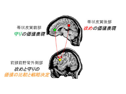 直観的な戦略決定担う脳の部位特定