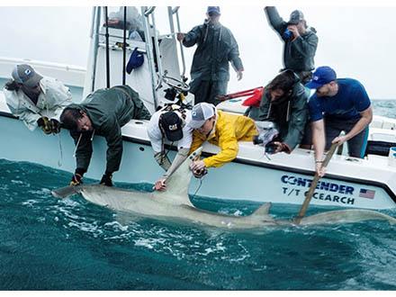 傾いて泳ぐ珍しいサメを発見 極地研
