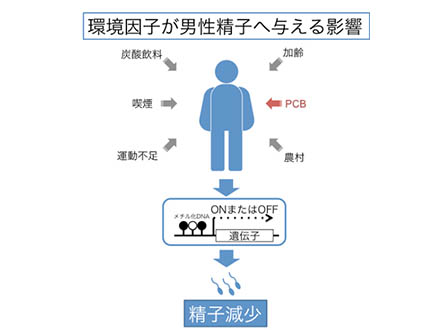 PCB濃度が精子に悪影響の可能性 東北大調査