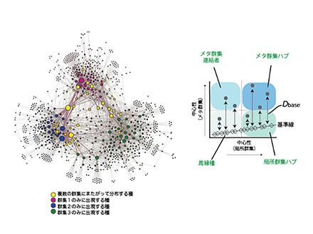 生態系の中心(ハブ)を探る新たな手法を開発
