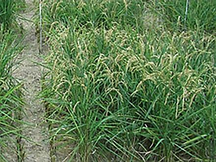 農業は地球の環境悪化の緩和に重要な役割を果たす