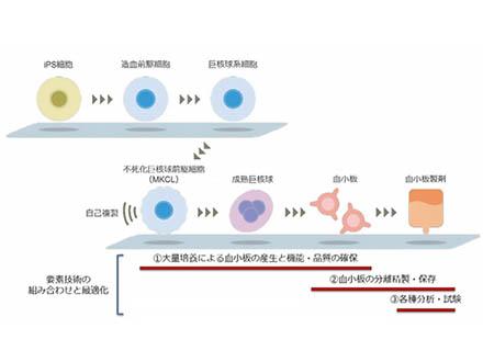 iPS細胞から輸血用血小板を量産する製法を確立 京都の大学発ベンチャー企業