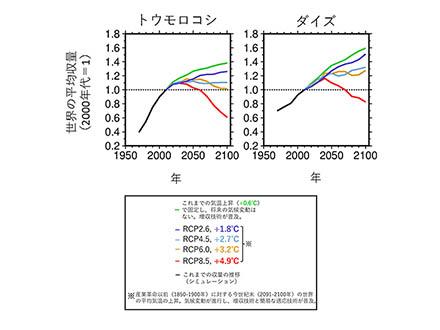 温暖化により世界の穀物収量の伸びは鈍化 農研機構など推計