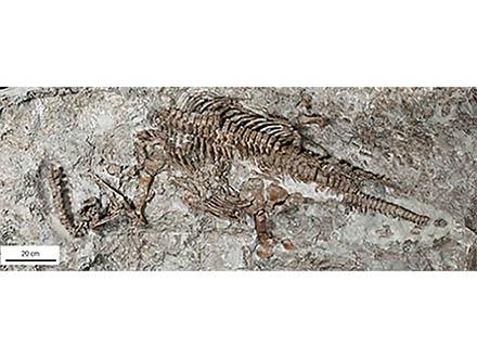 首長竜は大量絶滅を生き延びていた
