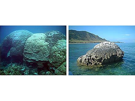 昔の海水温をきちんと記録しているサンゴの骨格を見分ける方法を開発