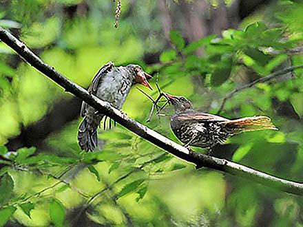 自然科学写真家にとって、大切なこと―昆虫写真家 海野和男氏