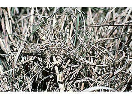2万6千種が絶滅危惧種に IUCNレッドリスト最新版