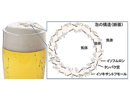ビールをうまくするあの泡には、さえた苦みのホップが集まってくる