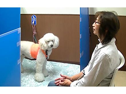 犬は人間に共感する能力を持っている —飼い主の短時間の情動変化にも呼応することを麻布大グループが心拍解析で解明