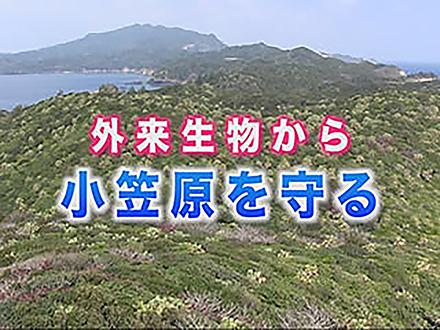 サイエンスニュース2013 外来生物から小笠原を守る(2014年4月16日配信)
