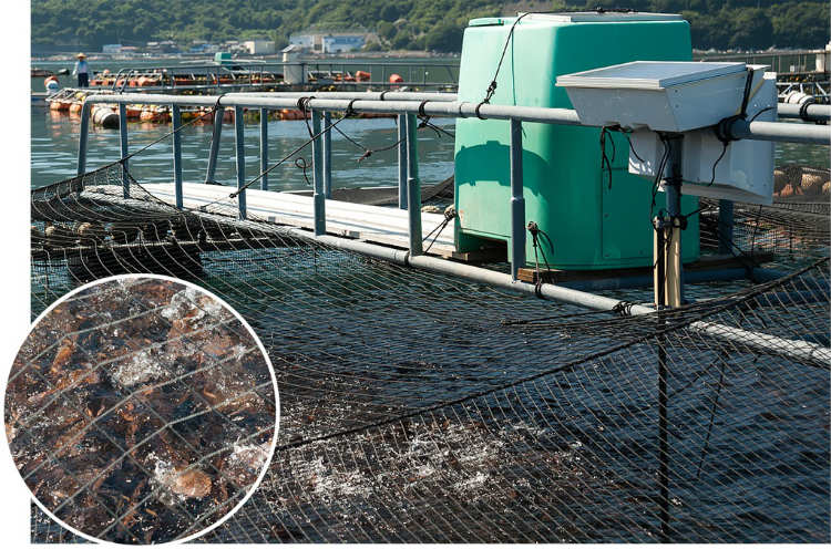 大西水産の生け簀に設置された「ウミガーデン」。餌の入ったタンクから遠隔操作で給餌できる。海中にはカメラを設置。給餌されると魚が勢いよく群がってくる。