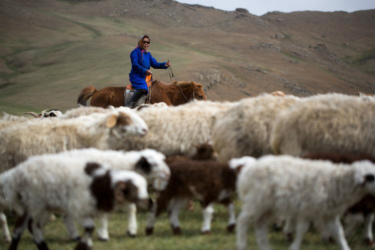 FAOはモンゴルにおける「ゾド」と呼ばれる気象災害を早期に予測し、遊牧民への緊急支援を行った。
