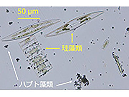 植物プランクトンの種類が海のCO2吸収に影響 国環研など南極海で調査