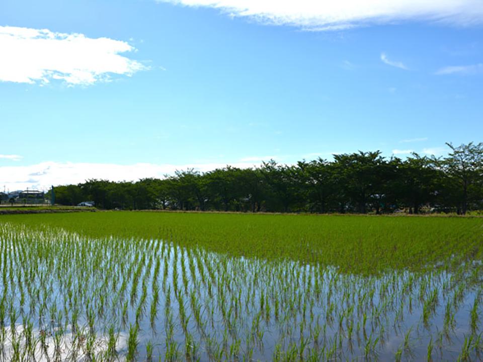 農業で地球温暖化に立ち向かう ~水田からのメタン抑制と高温耐性のイネ育種~