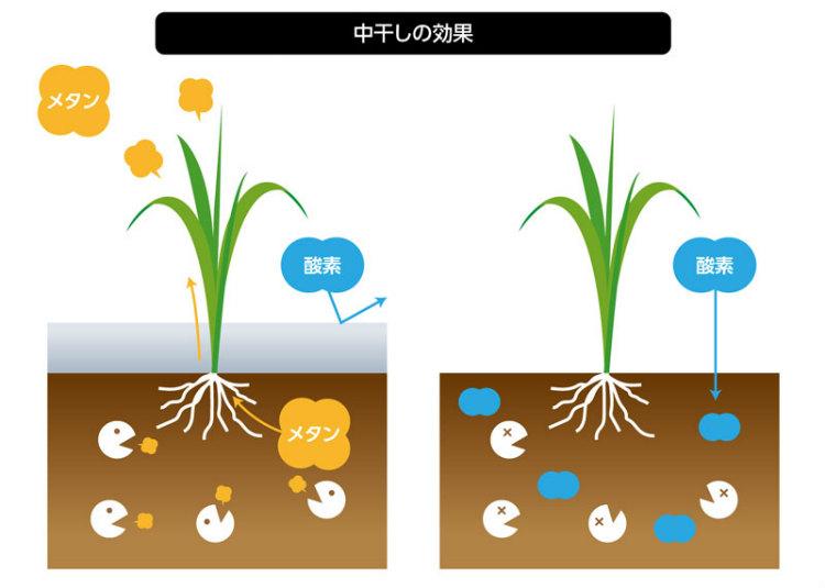 左図は水によって酸素が土壌に入らないため、メタン生成菌の働きでメタンが発生。水を抜くことで酸素が供給されメタンの発生を抑えることができる。