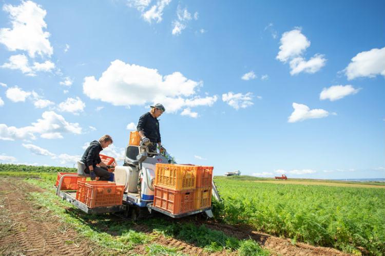 ニンジンの収穫を行う「ベジパレット」の高田庄平さん(左)と弟の耕作さん(右)。※画像提供:ベジパレット