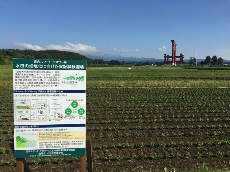 水田の畑地化に向けた実証試験を行っている。※画像提供:庄内スマート・テロワール推進協議会事務局