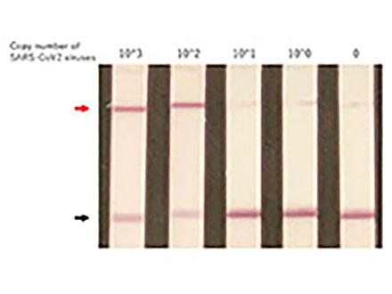 新型コロナ感染を最短40分で判定 東大、ゲノム編集による迅速診断法を開発