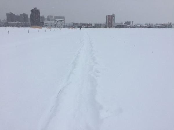 雪に覆われた北海道大学構内から市街地を望む。札幌市の年間積雪量は約6メートル。この積雪量で人口190万人を超える都市は、世界的に珍しいという(川村教授提供)